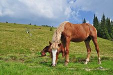 Free Horses On A Hillside Royalty Free Stock Photos - 17871558
