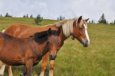 Free Horses On A Hillside Royalty Free Stock Images - 17871589