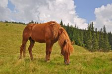 Free Horse On A Hillside Royalty Free Stock Photography - 17871627