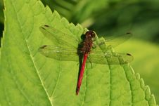 Free Dragonfly Stock Photography - 17871702