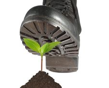 Military Shoe And Plant Royalty Free Stock Images