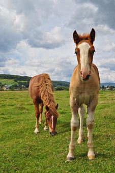 Free Horses On A Pasture Stock Photo - 17871870