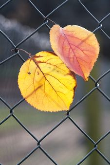Free Leaves The Network Royalty Free Stock Photos - 17871988