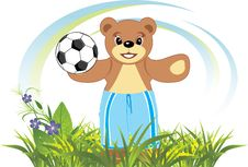 Bruin With Soccer Ball On The Meadow Stock Images