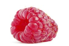 Free Raspberry Stock Photo - 17874350