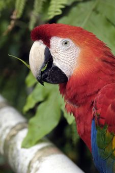 Free Parrot Royalty Free Stock Image - 17874876