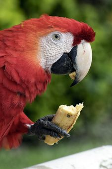 Free Parrot Stock Image - 17874891