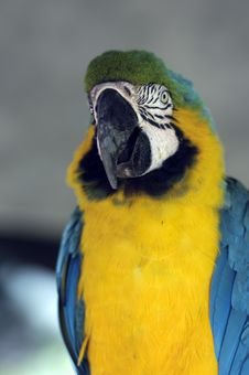 Free Parrot Royalty Free Stock Photography - 17874997