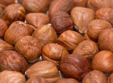 Free Hazelnut Stock Photo - 17875050
