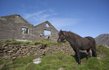 Free Icelandic Horse Standing In Old Ruins Royalty Free Stock Images - 17875279