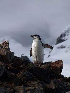 Free Penguin Stock Photo - 17875630