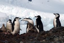 Free Penguin Stock Images - 17875644