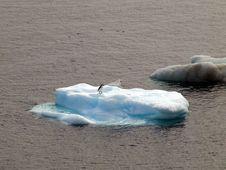 Free Penguin Royalty Free Stock Photos - 17875678