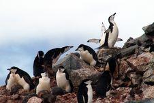 Free Penguin Stock Image - 17875701
