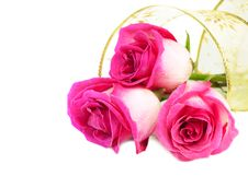 Free Roses Stock Photos - 17878013