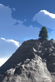 Free Tree In The Peak Stock Photo - 17878050