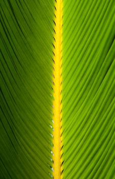 Free Palm Leaf Royalty Free Stock Images - 17878099