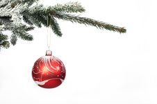Free Christmas Ball On Christmas Tree Royalty Free Stock Image - 17879896