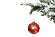 Free Christmas Ball On Christmas Tree Royalty Free Stock Photography - 17879897