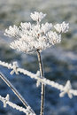 Free Ice Covered Plant Behind Barb Wire Stock Photo - 17883930