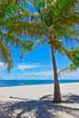 Free Sand Beach With Palm Trees Royalty Free Stock Images - 17886499