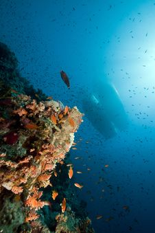 Marine Life And Boats In The Red Sea. Royalty Free Stock Image