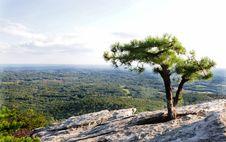 Free Tiny Tree Stock Photo - 17882160