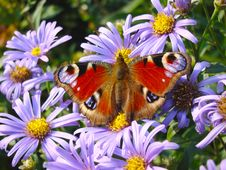 Free The Butterfly On Lilac Colours Stock Photos - 17882213