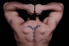Free Muscles Royalty Free Stock Image - 17882726