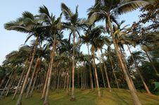 Free Coconut Trees Royalty Free Stock Photos - 17882958