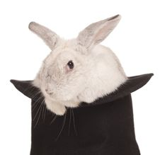 Free Fluffy Rabbit In Top Hat Stock Images - 17883344