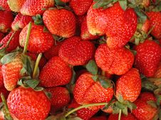 Free Strawberries Royalty Free Stock Photos - 17884208