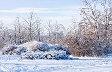 Free Winter Landscape Royalty Free Stock Photography - 17884277
