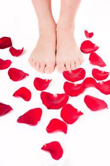 Free Beautiful Woman Legs With Rose Petals Stock Photos - 17885393