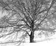 Free Winter Veins Stock Photography - 17886372