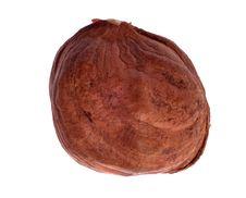 Free Single Hazelnut Isolated On White Stock Photo - 17887160