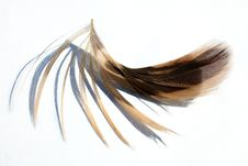Free Feathers Royalty Free Stock Photography - 17890927