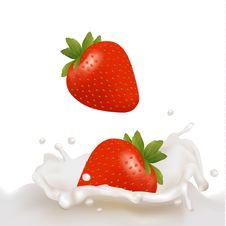 Free Strawberry Fruits Falling Into The Milky Splash Royalty Free Stock Photos - 17892508