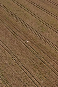 Free Man In Wheat Field Stock Image - 17893941