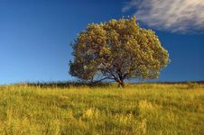 Free Lone Tree Royalty Free Stock Photo - 17895005