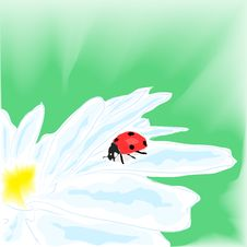 Free Ladybug On Daisy Royalty Free Stock Photos - 17896168