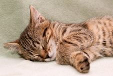Free Tabby Cat Sleeps Stock Image - 17896221