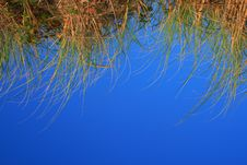 Free Grass On Blue Background Royalty Free Stock Photo - 17896515
