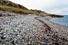Free Seaweed Track Stock Photo - 17897600