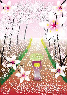 Free Sakura Stock Image - 17898821