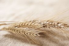 Free Wheat Royalty Free Stock Image - 17899296