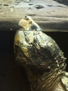 Underwater Sea Turtle Stock Photos