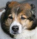 Free Nice Dog 7 Stock Photos - 1794773