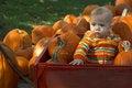 Free Pumpkin Patch Stock Photo - 1799930