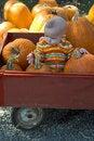 Free Pumpkin Patch Royalty Free Stock Photo - 1799955